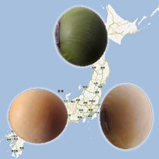 納豆 産地